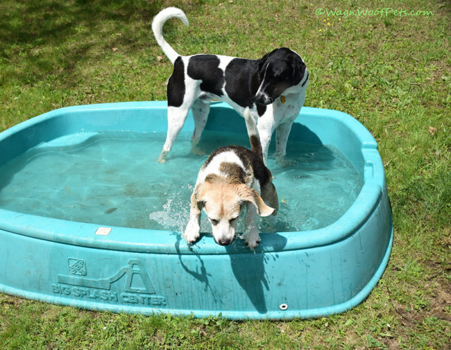 When Will the Pool Open? Flashback Friday
