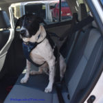 Solvit Deluxe Car Safety Harness – Review & Giveaway