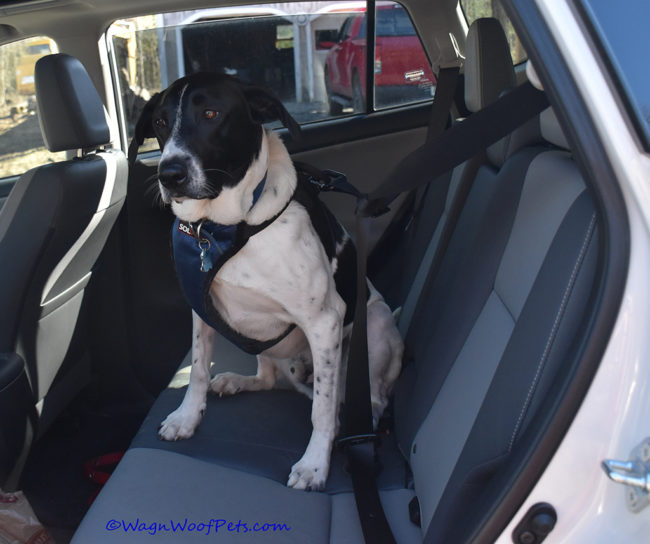 Solvit Deluxe Car Safety Harness Review & Giveaway
