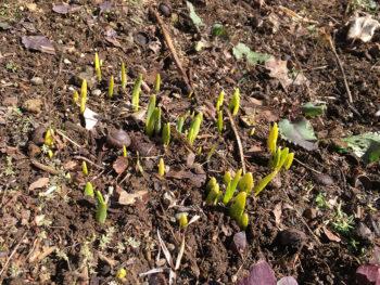 Spring has Literally Sprung
