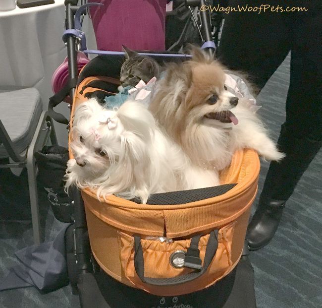 Cat with Dogs #BlogPaws