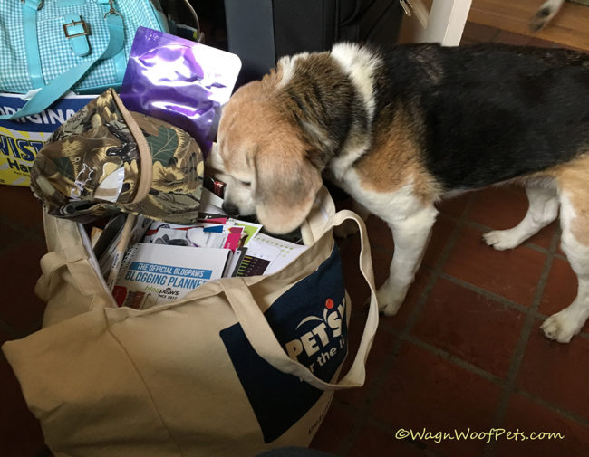 Coming Home from BlogPaws