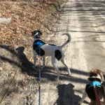 Tools for Walking a Reactive Dog