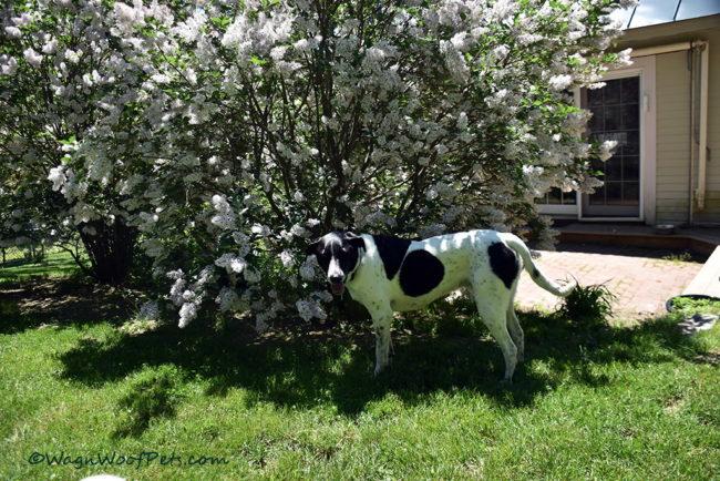 Flower Backdrop for Handsome Dog