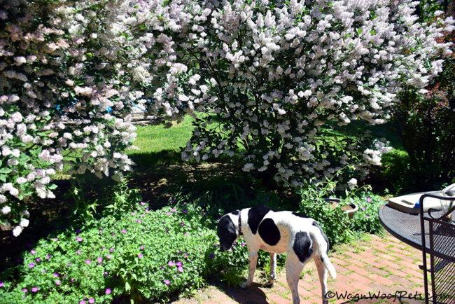 Luke Smells the Flowers!