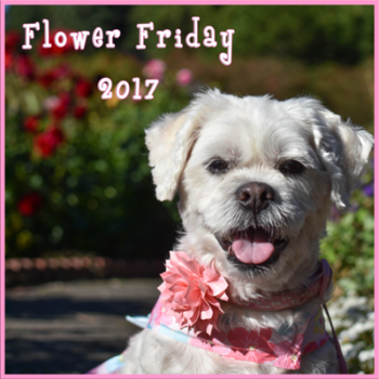 Flower Friday 2017