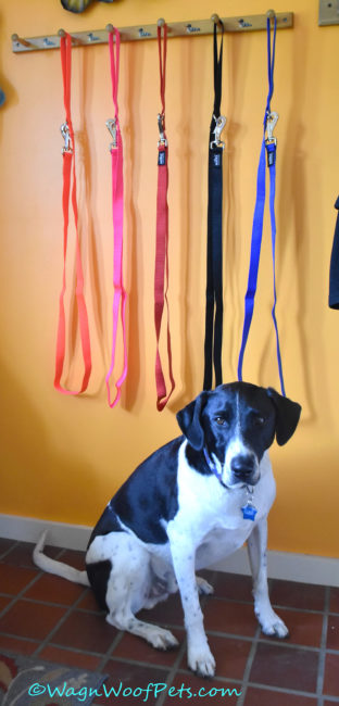 Feel Safe & Confident When Walking Your Dog with Nifti SafeLatch Pet Safety Leash