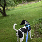 Feel Confident & Secure When Walking Your Dog with Nifti SafeLatch Pet Safety Leash