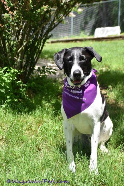 Unite to Fight Pet Cancer - Morris Animal Foundation