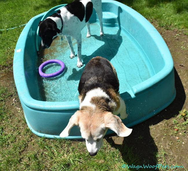 Fun in the Doggie Pool!