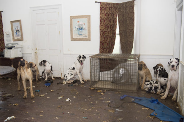 Puppy Mill Raided in NH