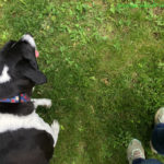Positive Pet Training: 3 Cues Your Dog Should Know for Summer Safety