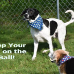 Wordless Wednesday – Eye on the Ball
