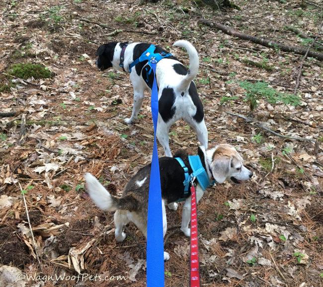 Two of the Best Kept Positive Pet Training Secrets