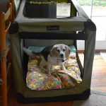 A Crate Upgrade with the Sheepy™ Wool-Filled Bed from Molly Mutt