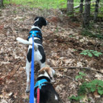 Exercising with Dogs – On Motivation and Consistency