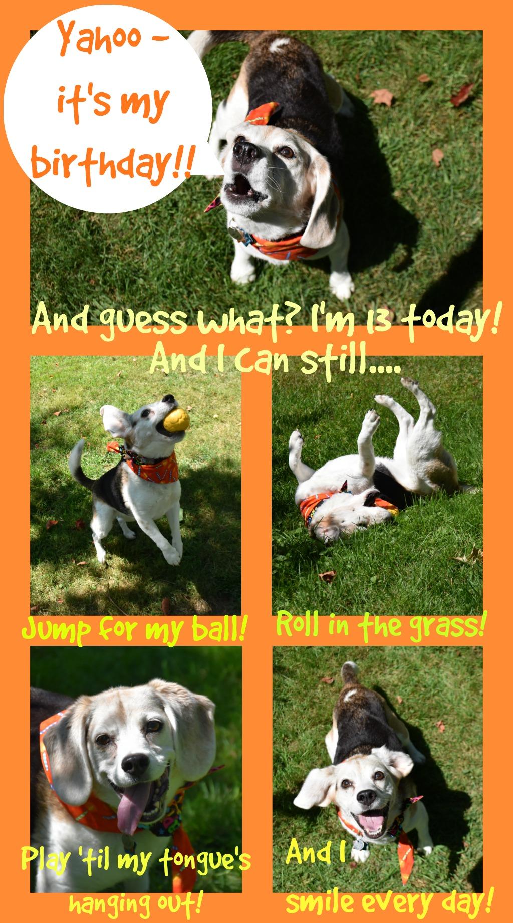Yahoo! It's a Beagle Birthday!