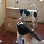 Our New Excitement – Fresh Dog Food Delivery! #NomNomNow