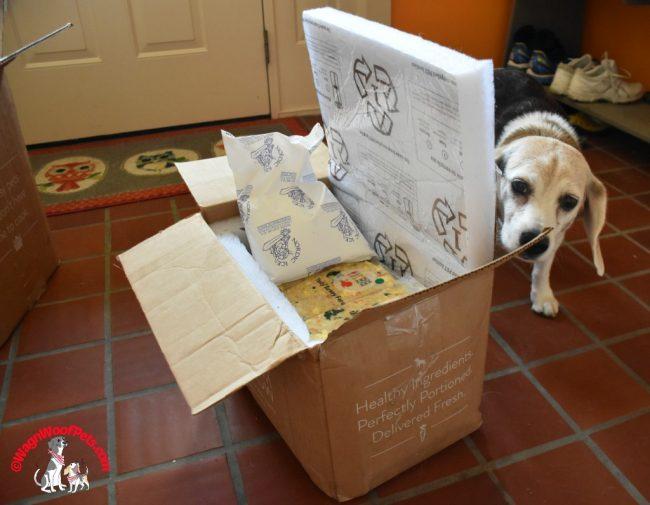 Beagle Cricket Checks Out #NomNomNow