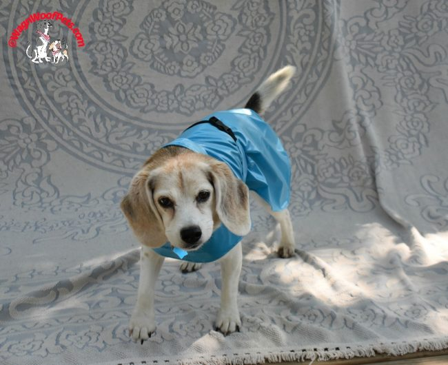 Dog Models - Cricket Models Her Raincoat