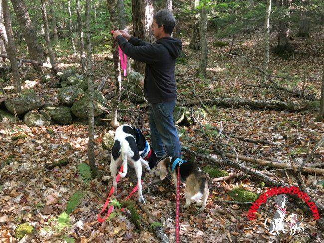 Togetherness - Blazing Trails