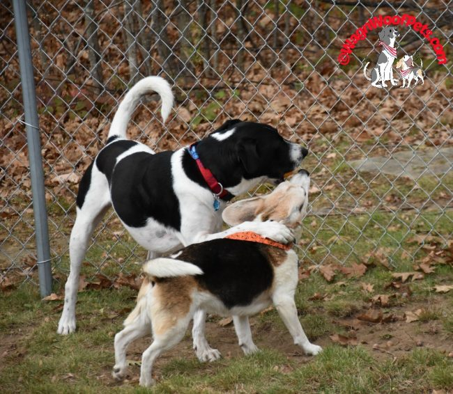 Dog Dance Moves