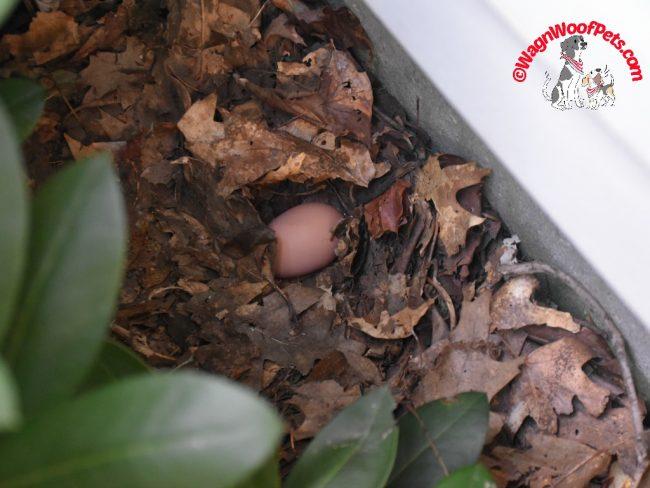 Egg Mischief!