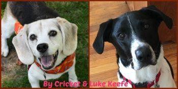 Cricket Luke Byline