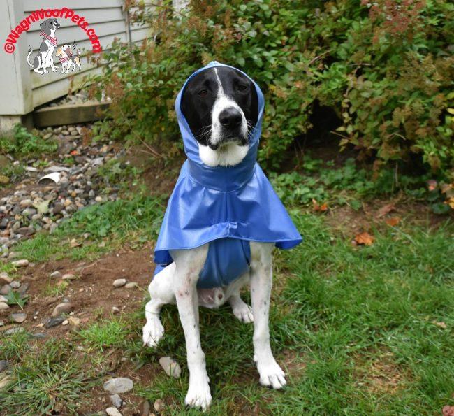 Positive Pet Training - When Your Dog Won't Listen