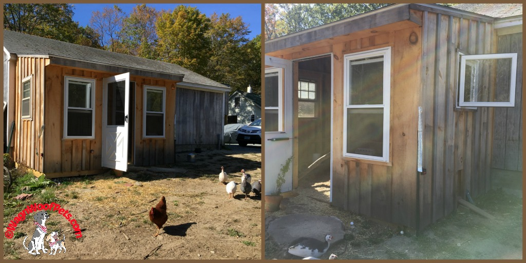Our Secure Chicken Coop