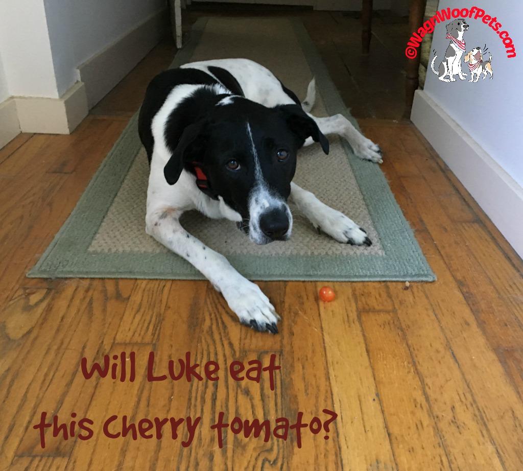 Luke Vs Cherry Tomato