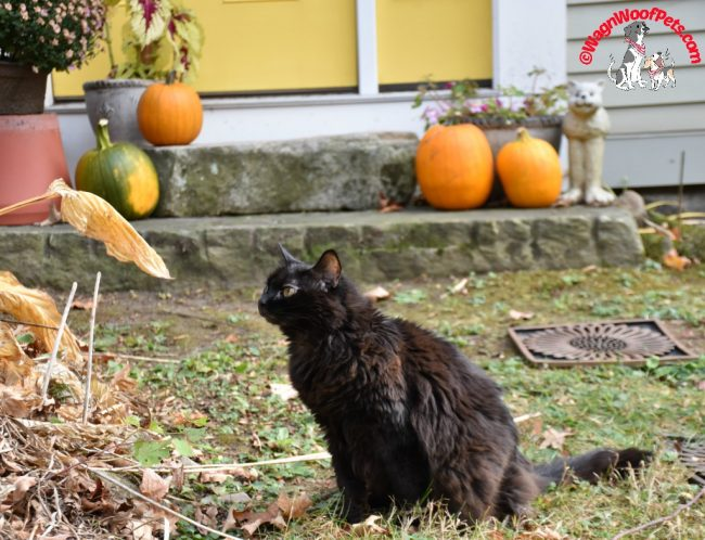 Our Cat Samantha Enjoys the Autumn Weather