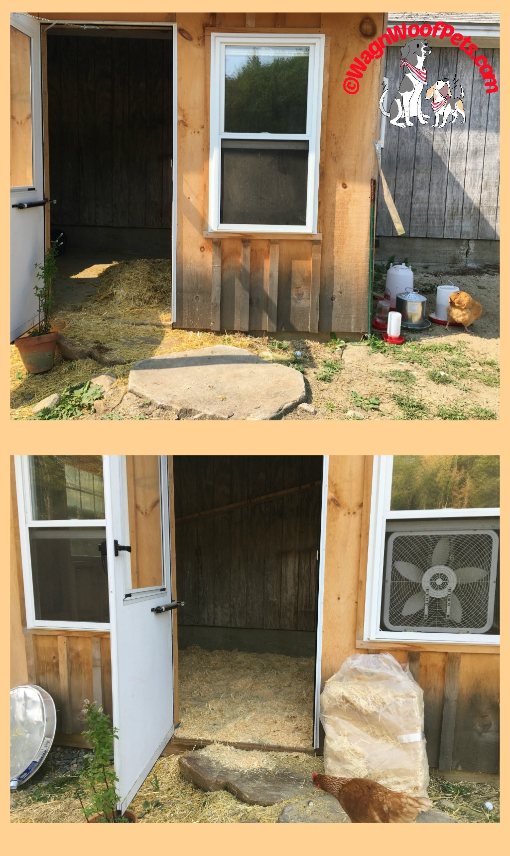 Preparing the Coop for Winter