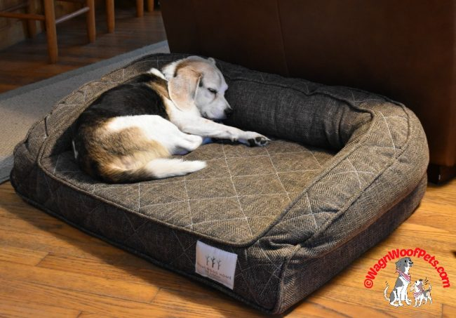 Beagle Snuggling on Brentwood Home Pet Bed