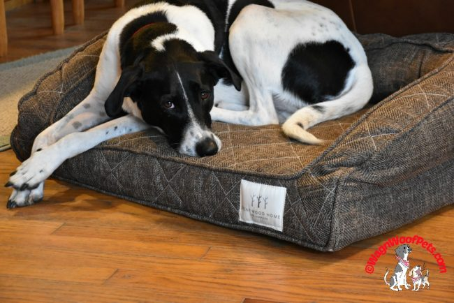 Brentwood Home Pet Beds Review