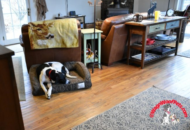 Stylish Brentwood Home Pet Beds