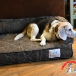 Home is Where the Dog Snuggles – Brentwood Home Pet Beds
