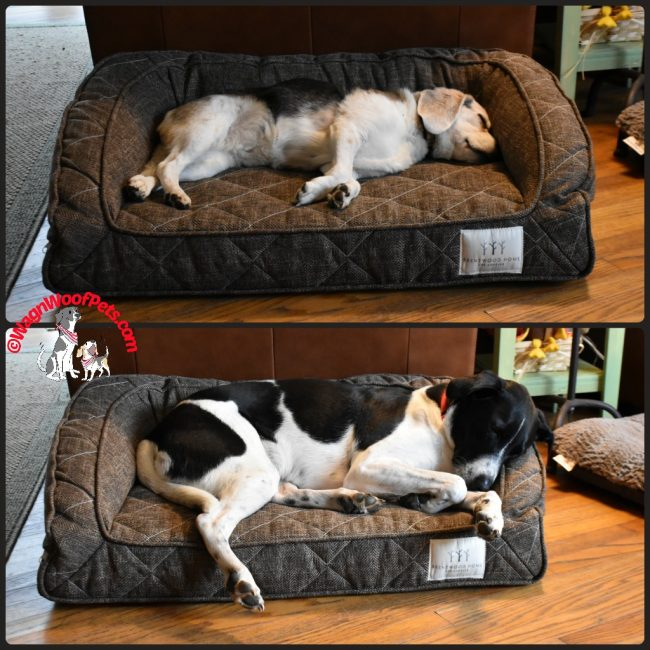Brentwood Home Orthopedic Pet Beds