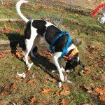 Farm Dog Friday – Luke's Little Adventure