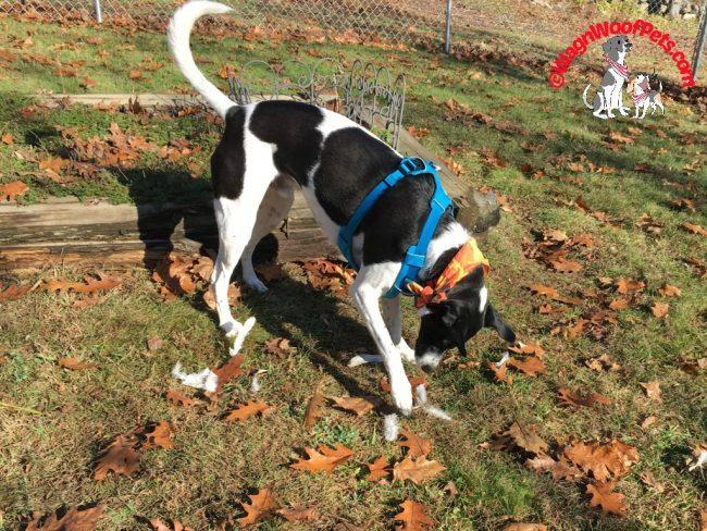 Farm Dog Friday - Luke's Little Adventure