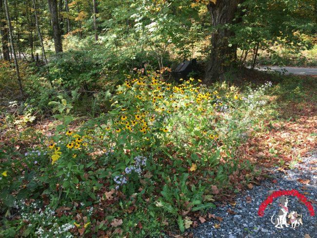 Fall Wildflowers