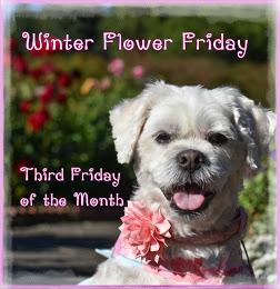 Winter Flower Friday