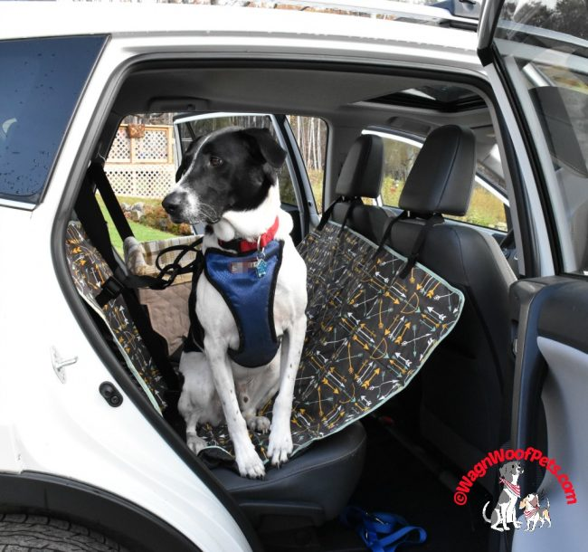 Travel in Style with Molly Mutt