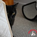 Wordless Wednesday: Peek-a-Boo Samantha