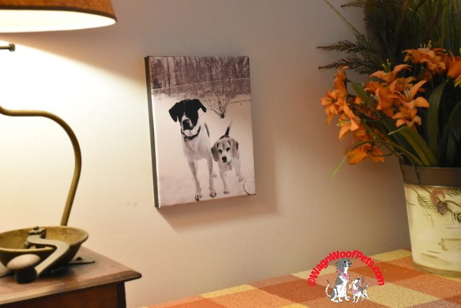 Turn Your Photos into Canvas Art with Simple Canvas Prints