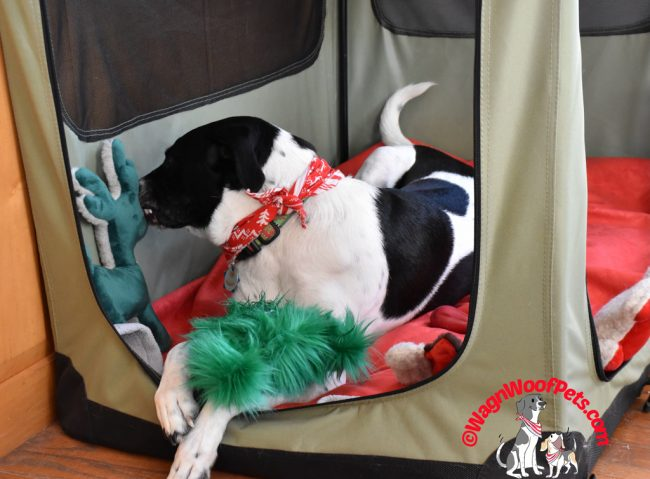 Christmas Fun in the Dog Crate