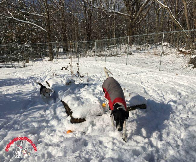 Fun in the First Snow of the Season