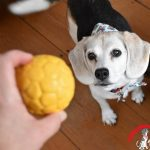 Our Favorite Things Old and New – Pet Gift Guide 2017 (Part 1)