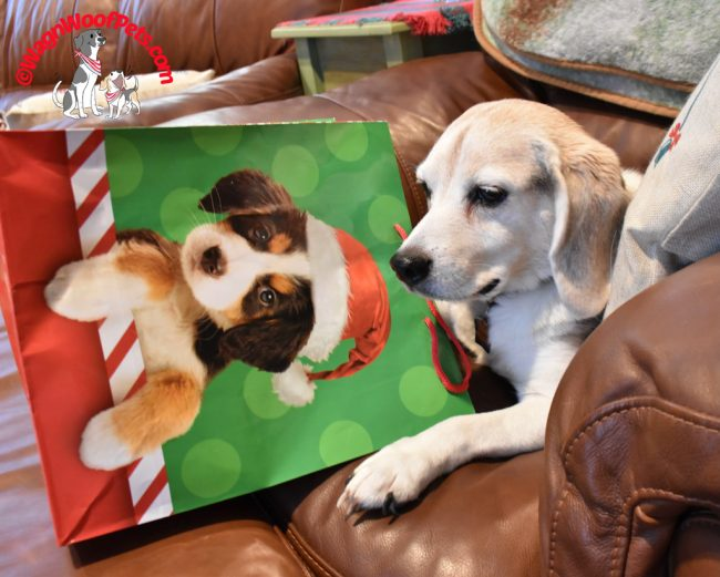 A Beagle on Christmas