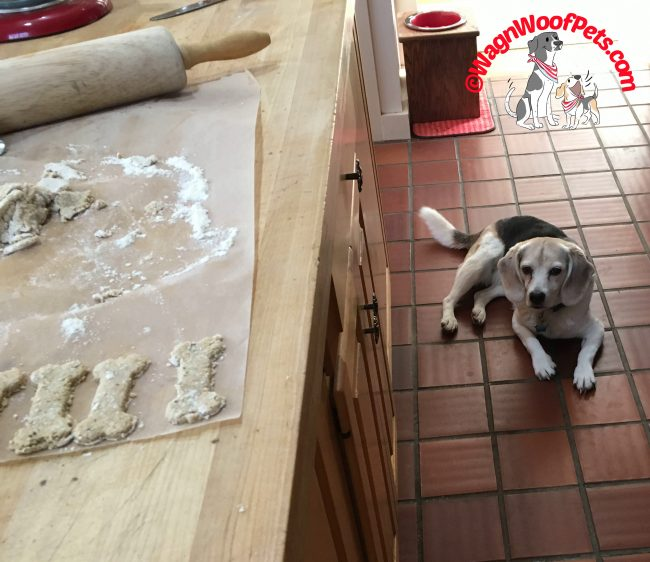 Baking Treats for the Beagle